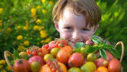 boy with heirloom tomatoes